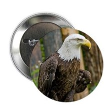 Bald Eagle Looking Button