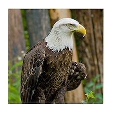 Bald Eagle Looking Tile Coaster