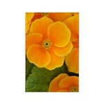 Primrose Rectangle Magnet (100 pack)