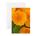 Primrose Greeting Cards (Pk of 10)