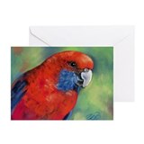 Rosella Greeting Cards (Pk of 10)