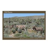Wild Burros #324 Postcards (8)