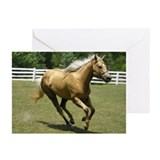 I Luv Palominos Greeting Cards (Pk of 10)