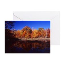 Carlos Avery Refuge Greeting Cards (Pk of 10)