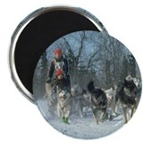 sled dog Magnet