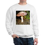 Large and small mushrooms Sweatshirt