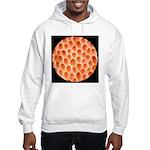 Spongy Cap Mushroom 20X Hooded Sweatshirt