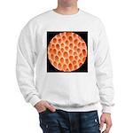 Spongy Cap Mushroom 20X Sweatshirt