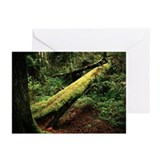 Cute Forrest Greeting Cards (Pk of 10)