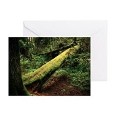 Cute Forrest green Greeting Cards (Pk of 10)