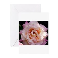 Cute Rose Greeting Cards (Pk of 20)