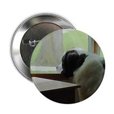 St. Bernard Waiting Button