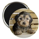 Adorable Yorkiepoo Magnet! 2.25&quot; Magnet (100 pack)