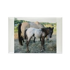 Appy foal Rectangle Magnet (100 pack)