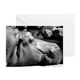 Hippo Doze Greeting Cards (6)