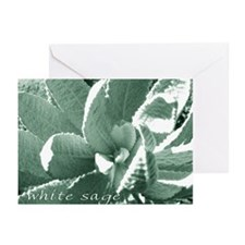 White Sage Greeting Cards (6)