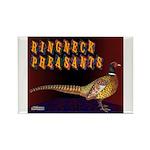 Ringneck Pheasants Rectangle Magnet (100 pack)