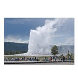 Yellowstone Faithful Postcards (Package of 8)