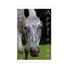Appaloosa Rectangle Decal