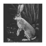 """Sage I"" Black-tailed Jackrabbit Tile Coaster"