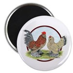 Belgian d'Uccle Bantams Magnet