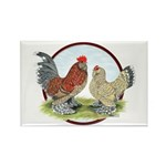 Belgian d'Uccle Bantams Rectangle Magnet (100 pack