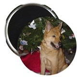 Unique Jindo dog Magnet