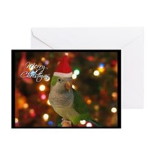 Quaker Parakeet Christmas Cards (Pk of 20)