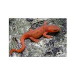 Salamander Rectangle Magnet