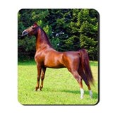 Morgan Stallion (watercolor) Mousepad