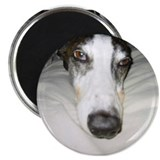 "2.25"" Magnet (10 pack) GreyHound"