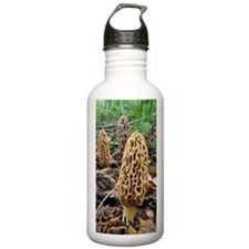 Morels Water Bottle
