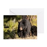 &quot;Black Bear&quot; Single Greeting Card