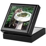 Maine Coon cat birdbath Keepsake Box