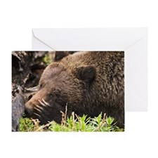 """Shy Grizzly"" Single Greeting Card"