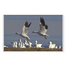 Snow Geese Rectangle Decal