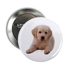 "Golden Retriever Puppy Lying Down 2.25"" Button (10"