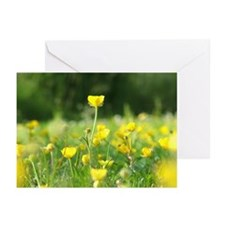 Buttercup Greeting Cards (Pk of 10)