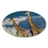 Giraffe Oval Decal