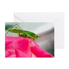 Helaine's Grasshopper Greeting Cards (Pk of 10)