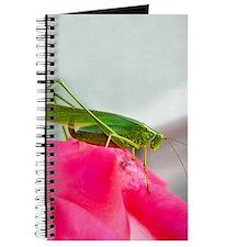 Helaine's Grasshopper Journal