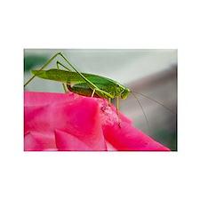 Helaine's Grasshopper Rectangle Magnet