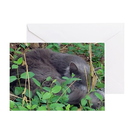 Honeysuckle Nap Greeting Card