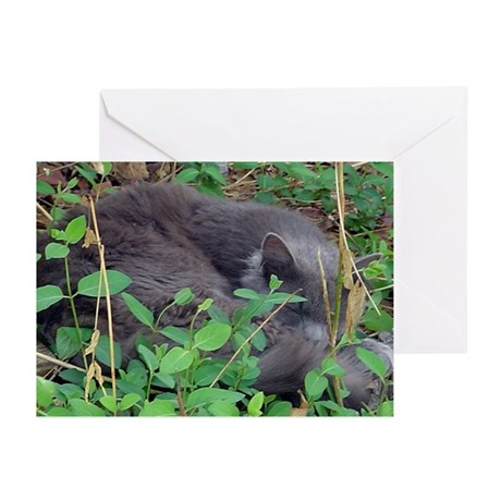 Honeysuckle Nap Greeting Cards (Pk of 10)