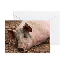 Sleeping Pig Greeting Card