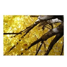 Yellow Leaves Postcards (Package of 8)