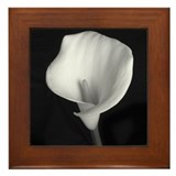 Framed Tile - &quot;Calla Lily #1&quot;