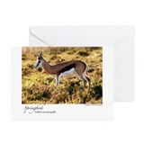 Springbok Greeting Cards (Pk of 10)