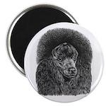 Black Poodle 2.25