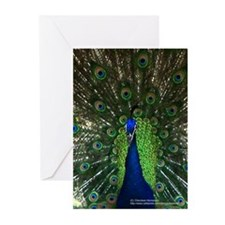 Colorful Peacock 2 Greeting Cards (Pk of 20)